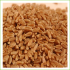Wheat Hard Red Winter (organic) 1kg