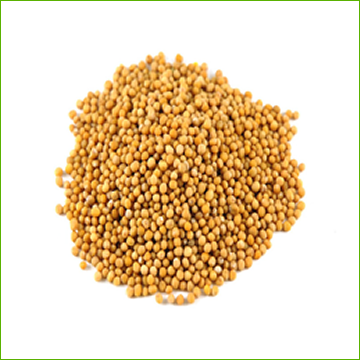 Mustard-Yellow (organic) 1kg - Click Image to Close