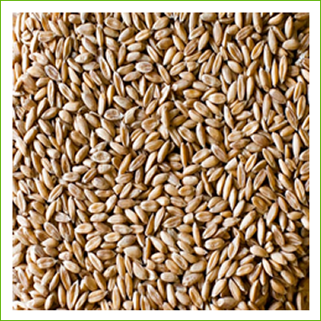 Spelt-Hulled (organic) -1kg - Click Image to Close