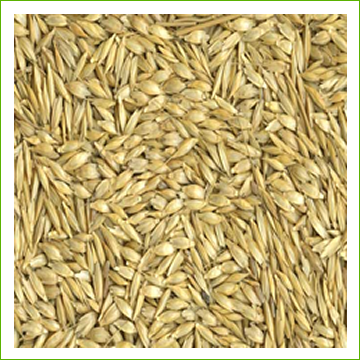 Wheat -Einkorn (organic)-5kg - Click Image to Close